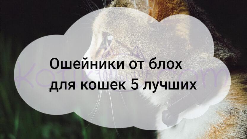 Ошейники от блох для кошек 5 лучших