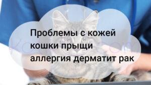 Проблемы с кожей кошки прыщи аллергия дерматит рак