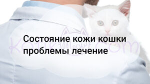 Состояние кожи кошки проблемы лечение
