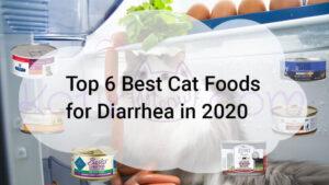 Top 6 Best Cat Foods for Diarrhea in 2020