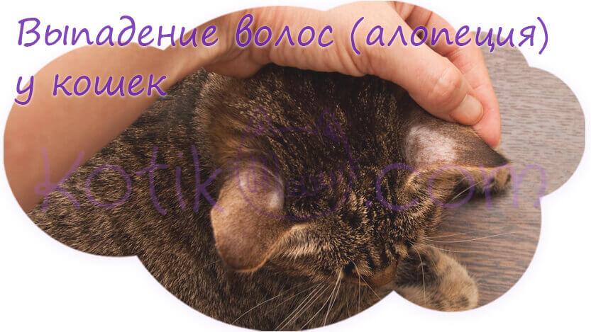 Выпадение волос алопеция у кошек