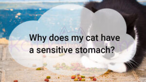 Why does my cat have a sensitive stomach?