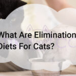 What Are Elimination Diets For Cats?