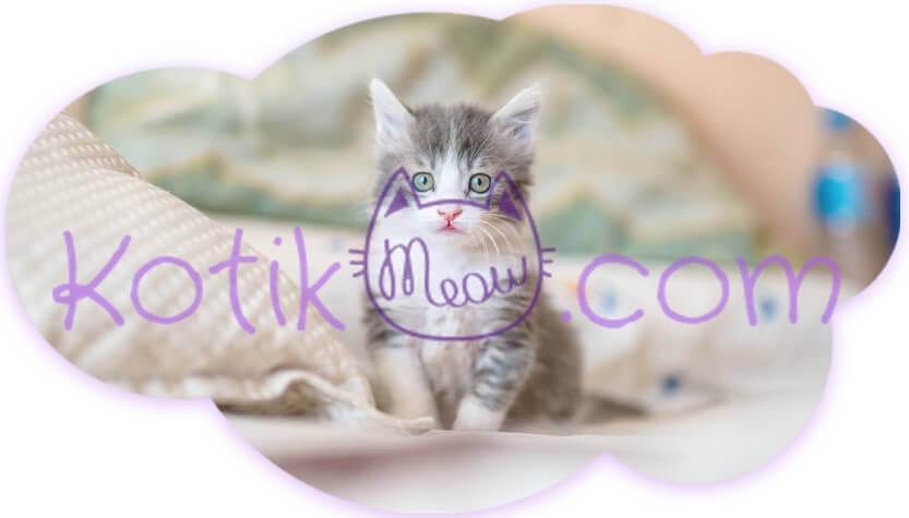 Блог о кошках, здоровье кошки, котенок в доме, Kotikmeow