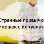 Странные привычки у кошек с их туалетом