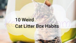 10 Weird Cat Litter Box Habits