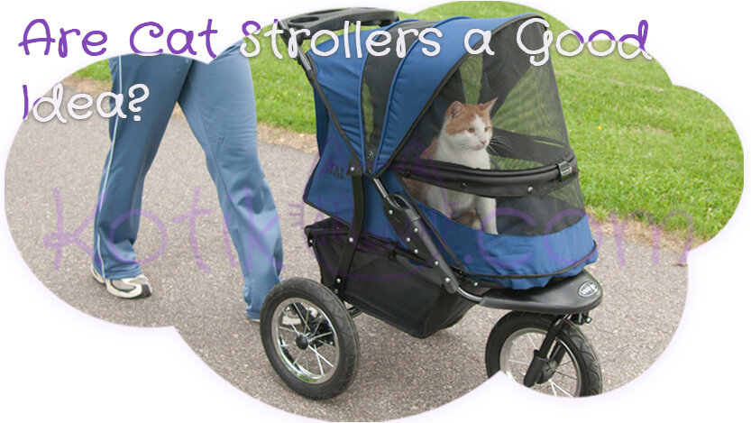 Are cat strollers a good idea?