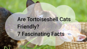 Are Tortoiseshell Cats Friendly? 7 Fascinating Facts