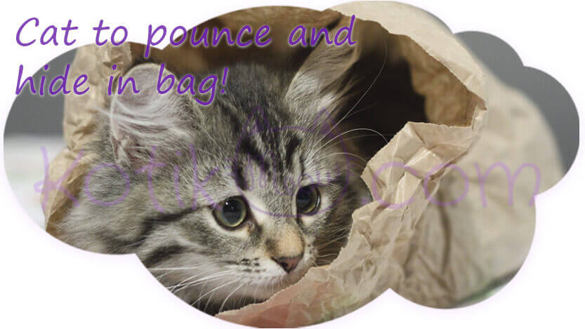 Cat in bag hunt kotikmeow