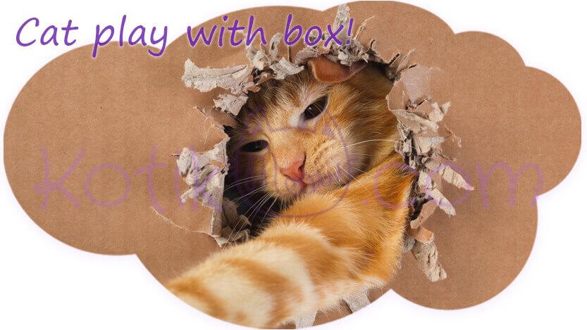 Cat play with box Peekaboo kotikmeow