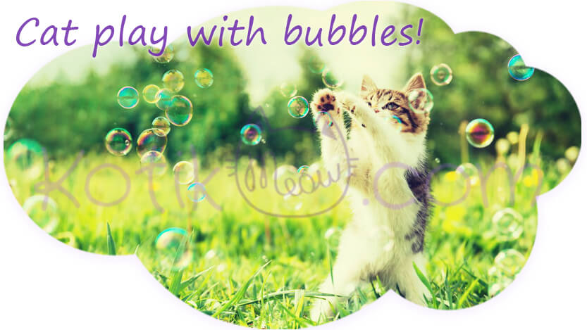 Cat play with bubbles
