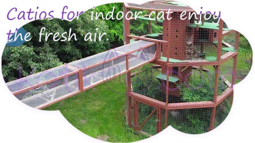 Catios for indoor cat enjoy the fresh air