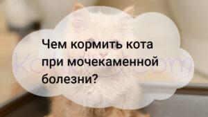 Чем кормить кота при мочекаменной болезни?