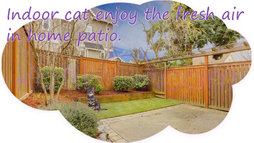 Indoor cat enjoy the fresh air in home patio