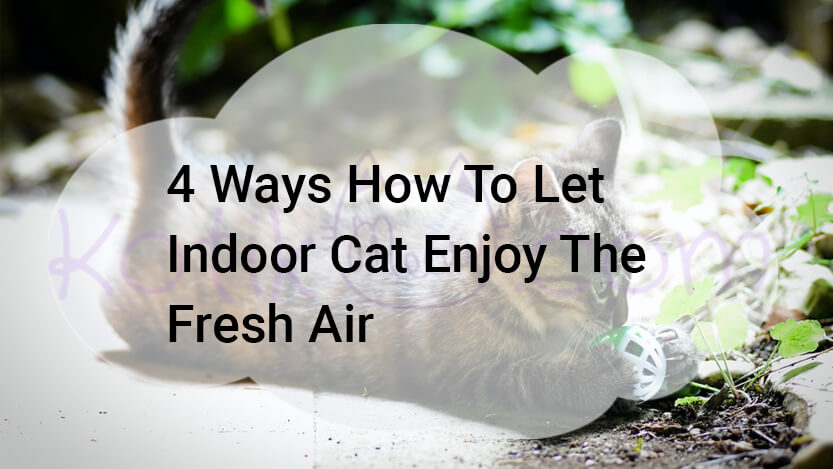 How to let indoor cat enjoy the fresh air
