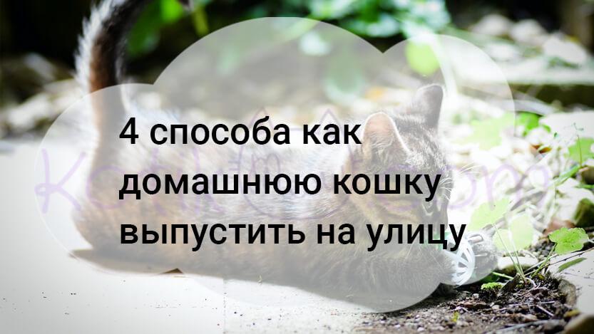 4 способа как домашнюю кошку выпустить на улицу