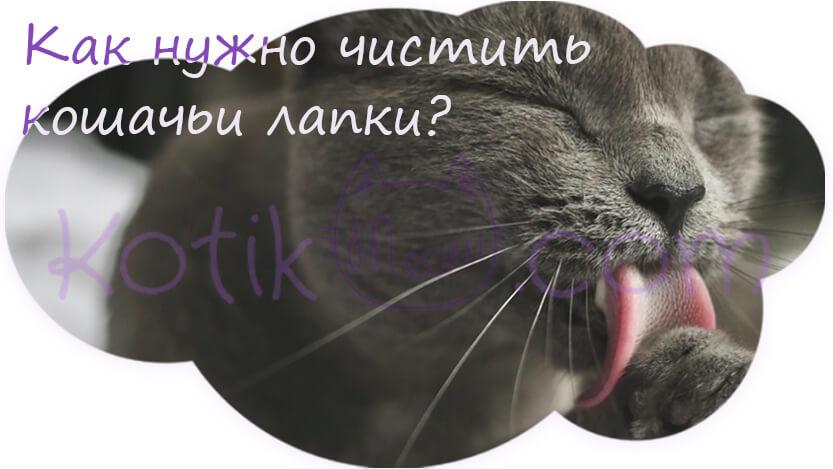 Как нужно чистить кошачьи лапки