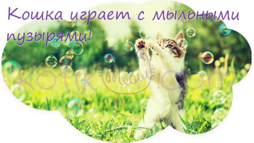 Кошка играет с мыльными пузырями
