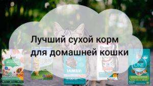 Лучший сухой корм для домашней кошки