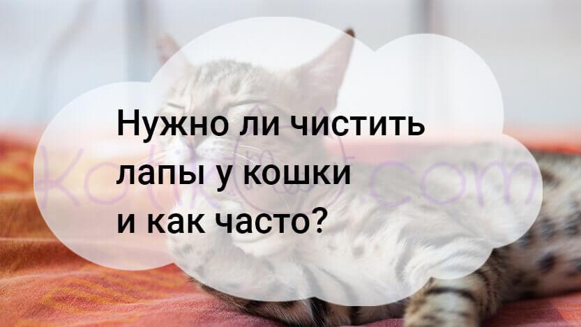 Нужно ли чистить лапы у кошки и как часто?