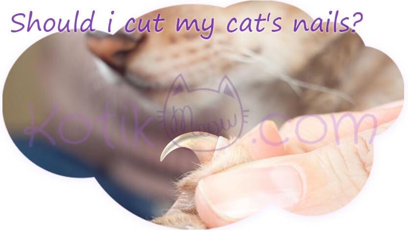 Should i cut my cat's nails