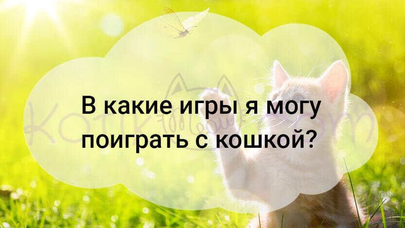 В какие игры я могу поиграть с кошкой?