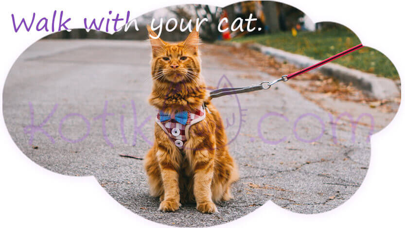 Walk with your cat