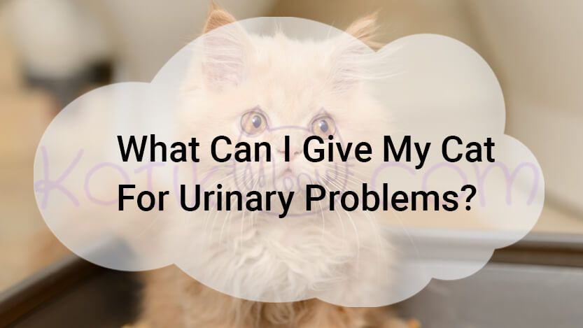 What Can I Give My Cat For Urinary Problems?