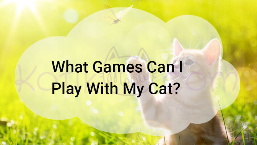 What games can i play with my cat