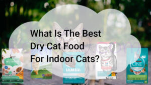 What Is The Best Dry Cat Food For Indoor Cats?