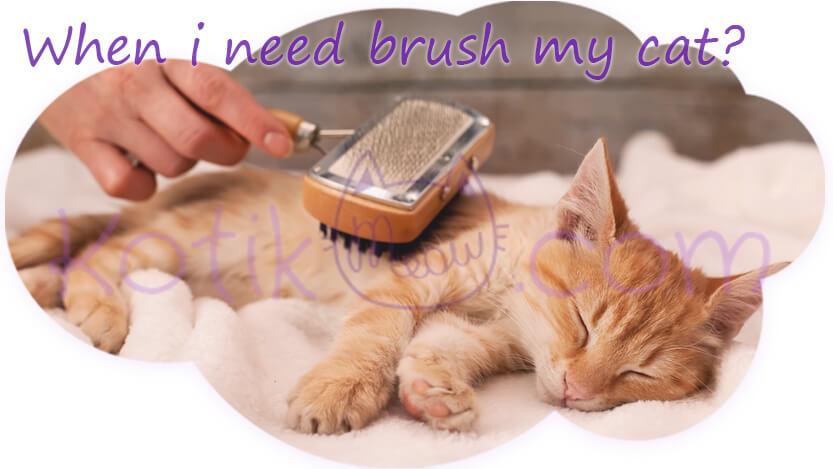 When i need brush my cat