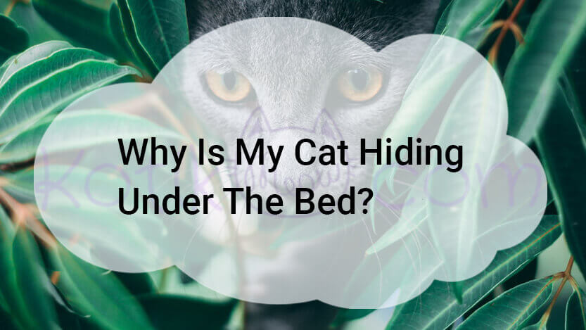 Why Is My Cat Hiding Under The Bed?