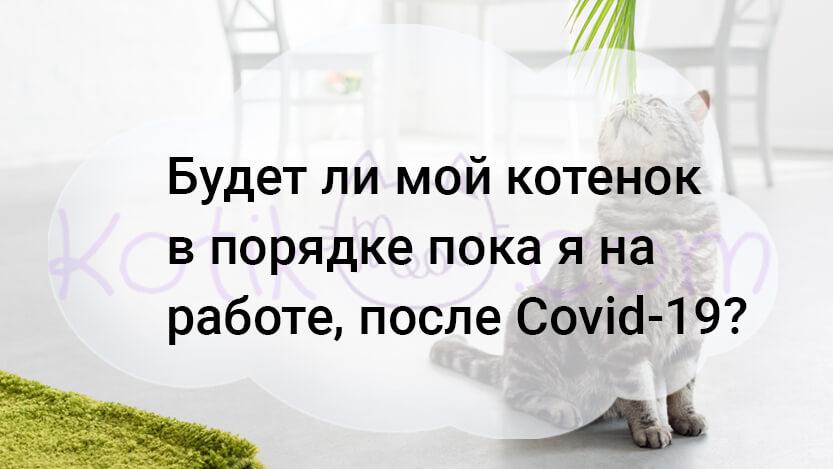 Будет ли мой котенок в порядке пока я на работе, после Covid-19?