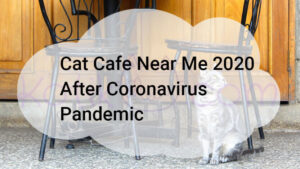 Cat Cafe Near Me 2020 After Coronavirus Pandemic