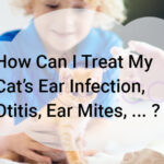 How Can I Treat My Cat's Ear Infection, Otitis?