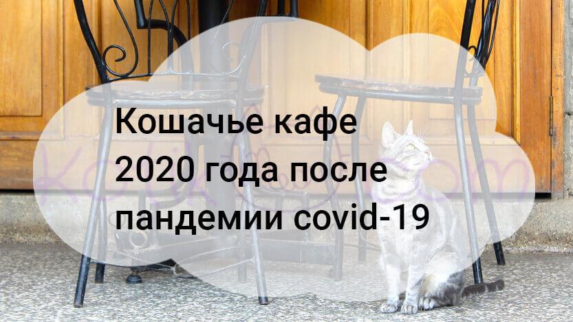 Кошачье кафе 2020 года после пандемии covid-19