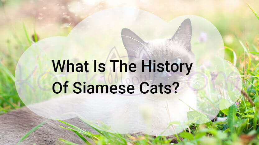 What Is The History Of Siamese Cats?