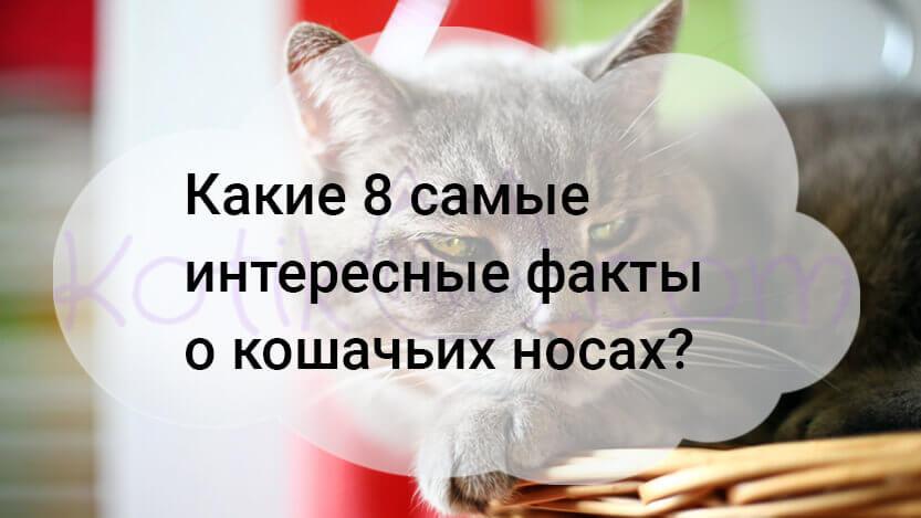 Какие 8 самые интересные факты о кошачьих носах?