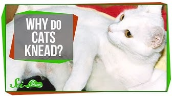 let's look at how cats knead