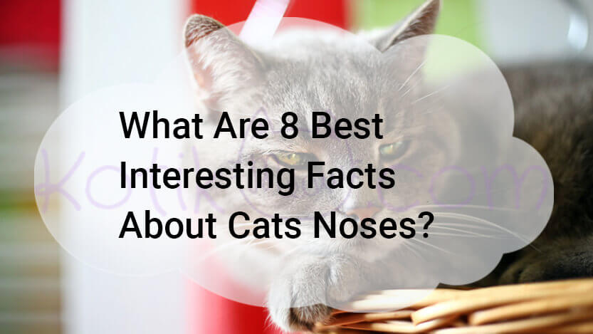 What 8 best interesting facts about cats noses