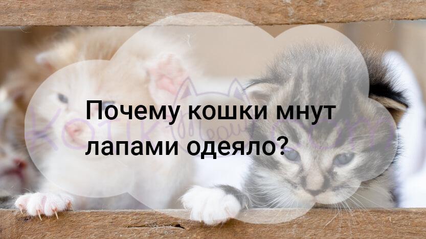 Почему кошки мнут лапами одеяло?
