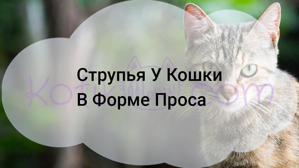 Это также первый шаг к формированию струпьев у кошки в форме проса