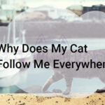 Why Does My Cat Follow Me Everywhere?