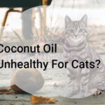 Coconut Oil Unhealthy For Cats?