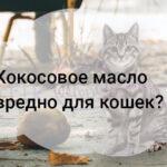Кокосовое масло вредно для кошек?