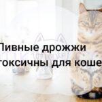Пивные дрожжи токсичны для кошек?