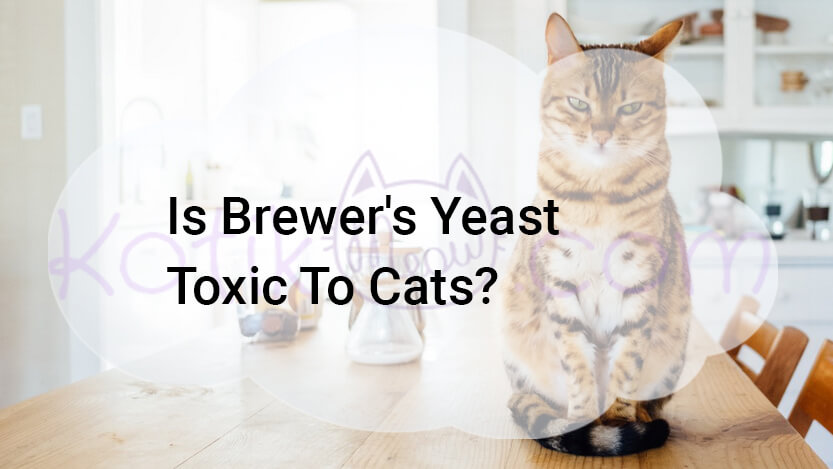 Is Brewer's Yeast Toxic To Cats?