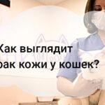 Как выглядит рак кожи у кошек?