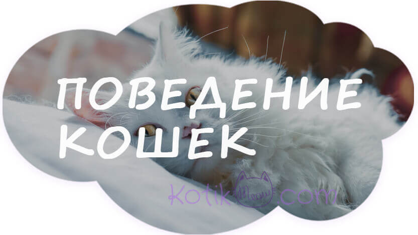 Расшифровка поведения кошек
