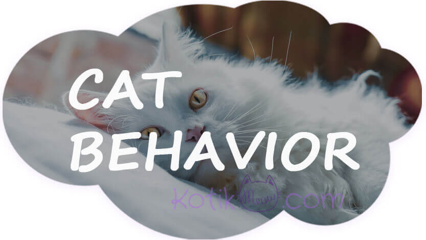 What is the most common behavior problem in cats?